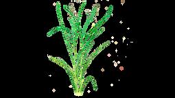 Pasto 1920 x 1080.png