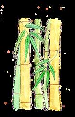 Bambú.png