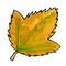 hoja 1(1).png