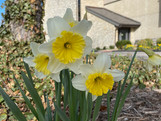 Join us for an Outdoor Eucharist on Easter Sunday at 12:30