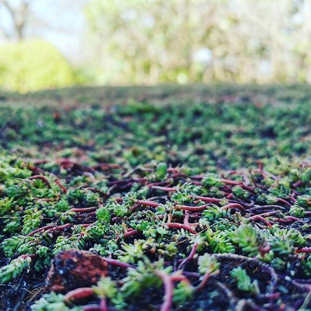 Cedum roof in Tunbridge Wells, Kent