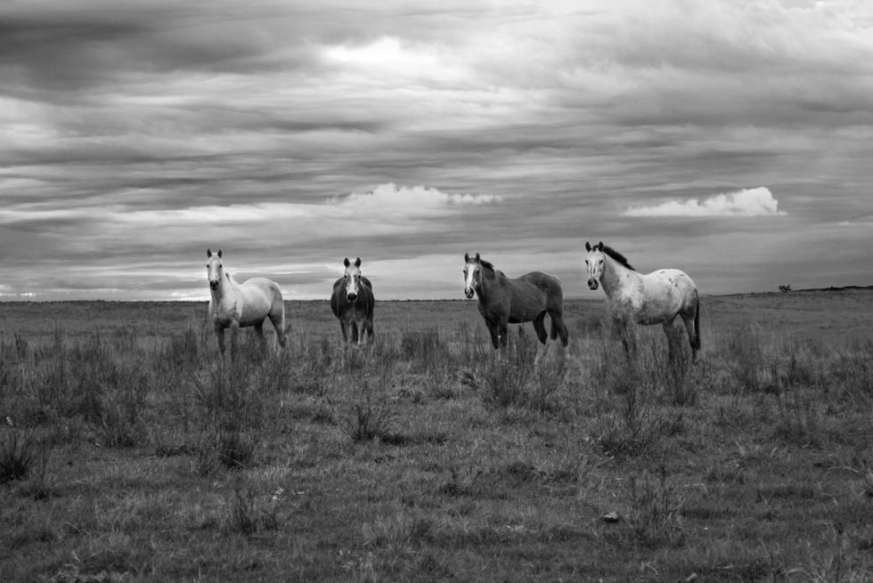 cavalos_bw.jpg