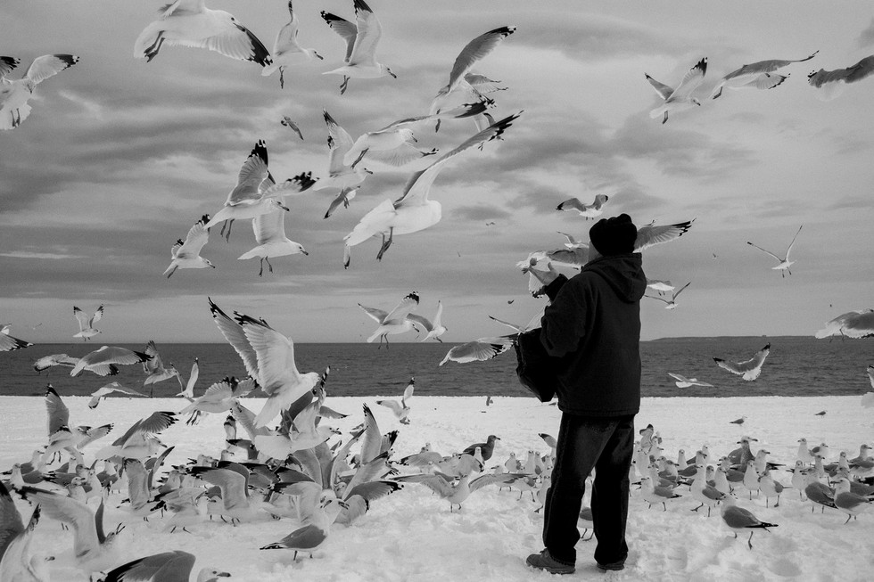 Gulls_2.jpg
