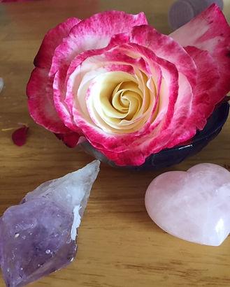 beautiful rose.JPG