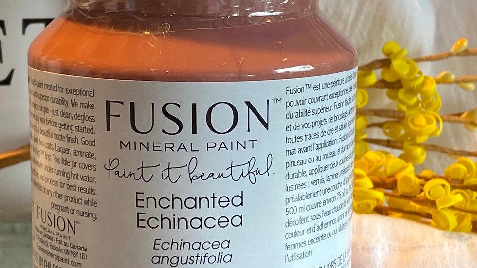 Enchanted Echinacea