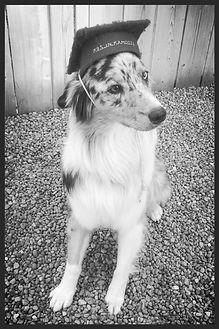Wagging Woofies Dog Walking and Training Richmond Hill dog walker, Aurora dog walker, Newmarket dog walker, Thornhill dog walker, King City dog walker