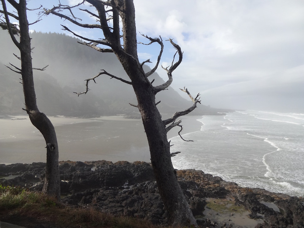 Hiked through Cape Perpetua - gorgeous and quiet! Because it was low tide we missed the excitement of Devil's Churn, but it's on our list for a wintertime visit!