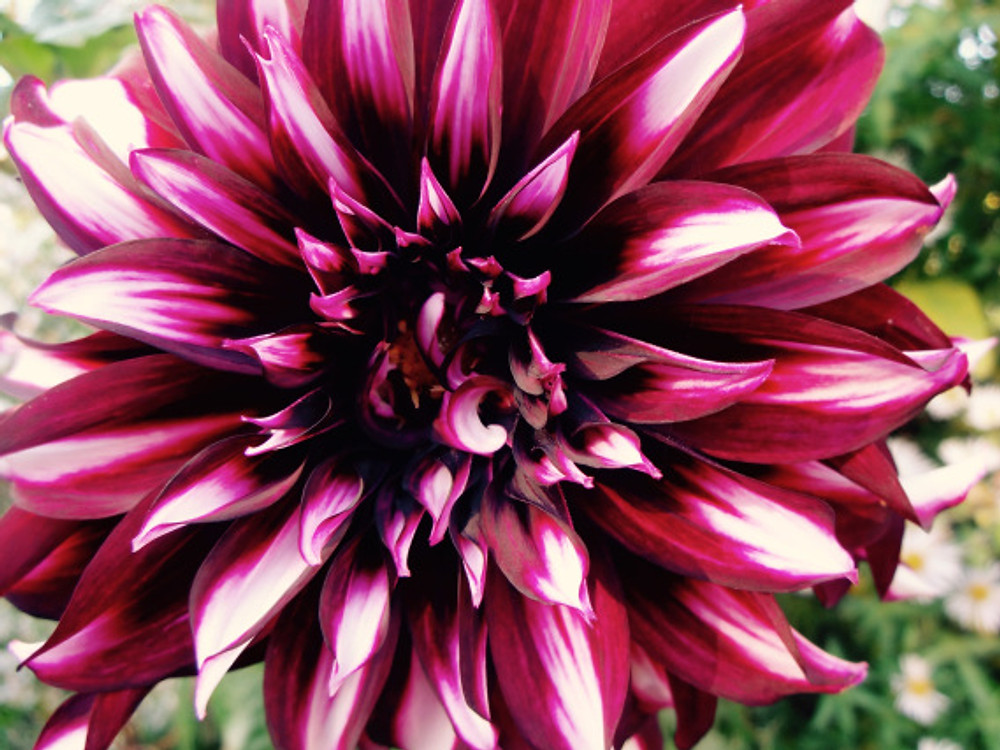 Giv-flower30