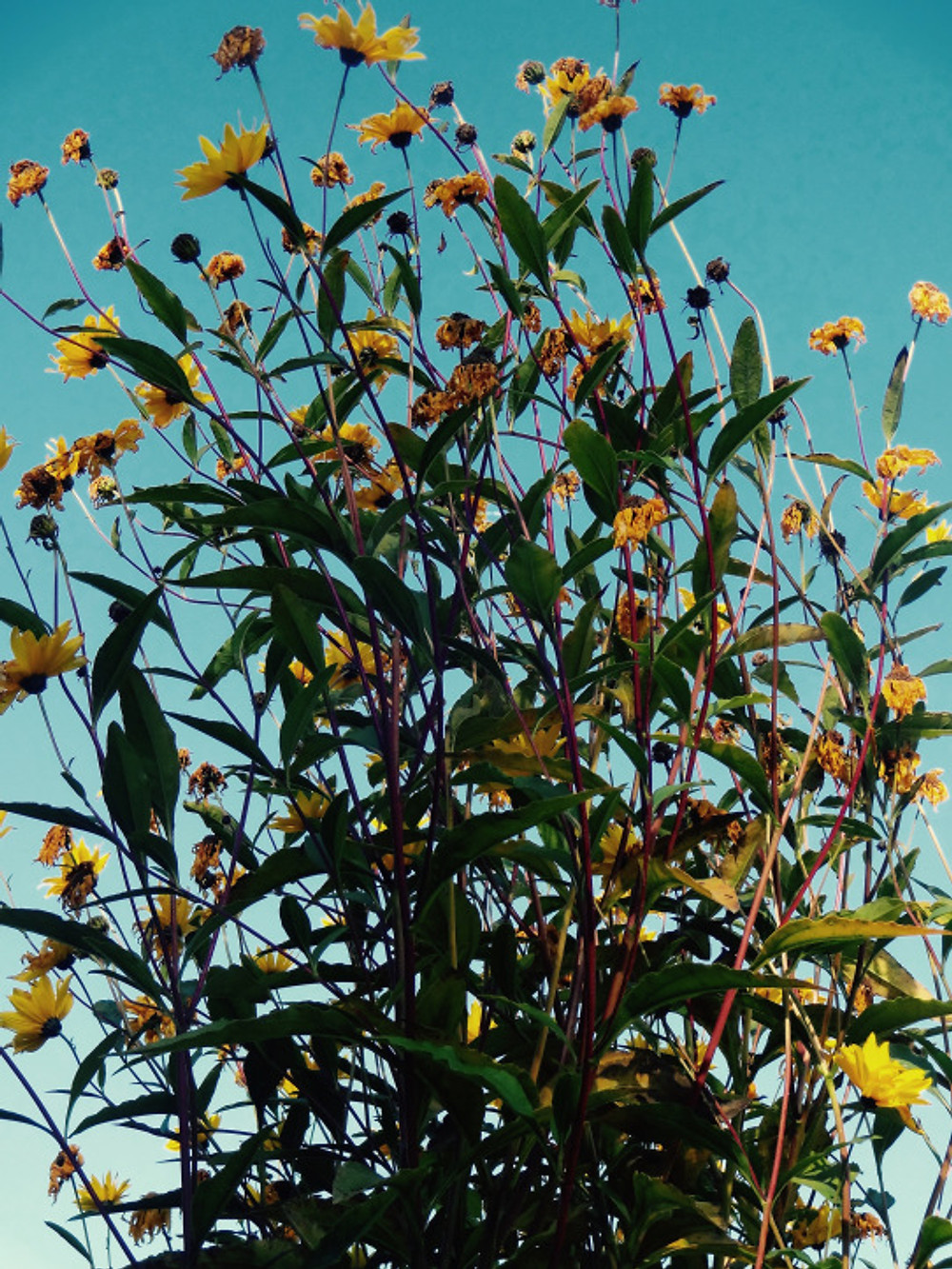 Giv-flower3