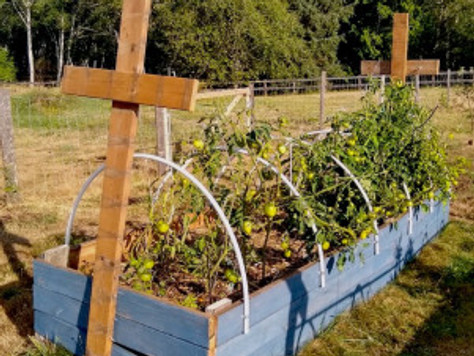 2019 Gardening Lessons Learned