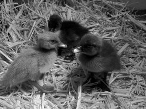 Nesting? Yes, Nesting.