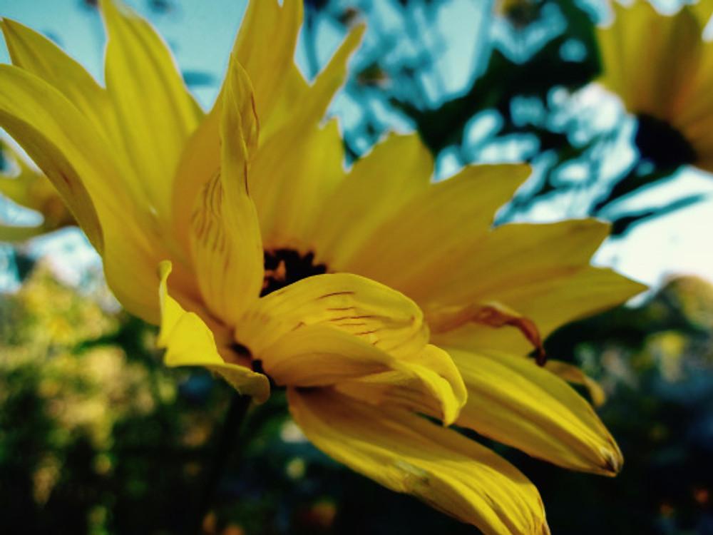 Giv-flower9