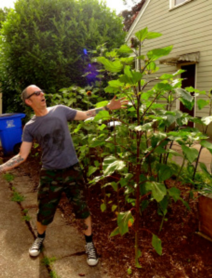 and while I'm documenting what's growing, check out how freakin' tall the sunflowers are! dang!