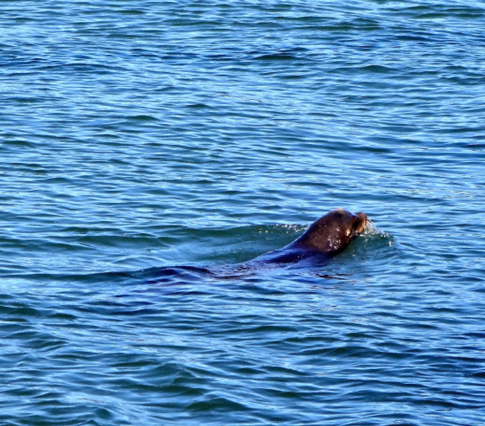 Fell in love with the seals :)