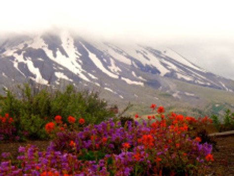 Summer Holiday: Mount St. Helens