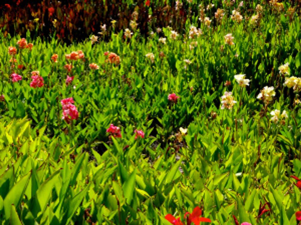 bg-flowers
