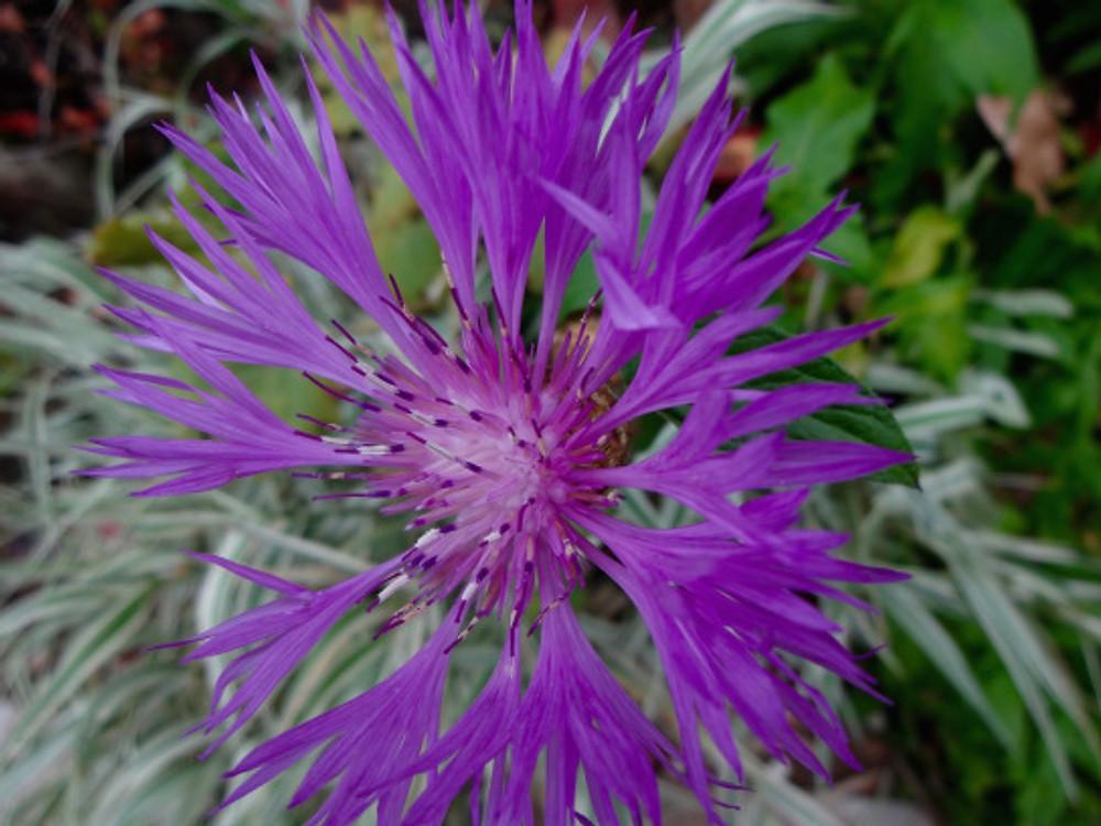 Giv-flower14