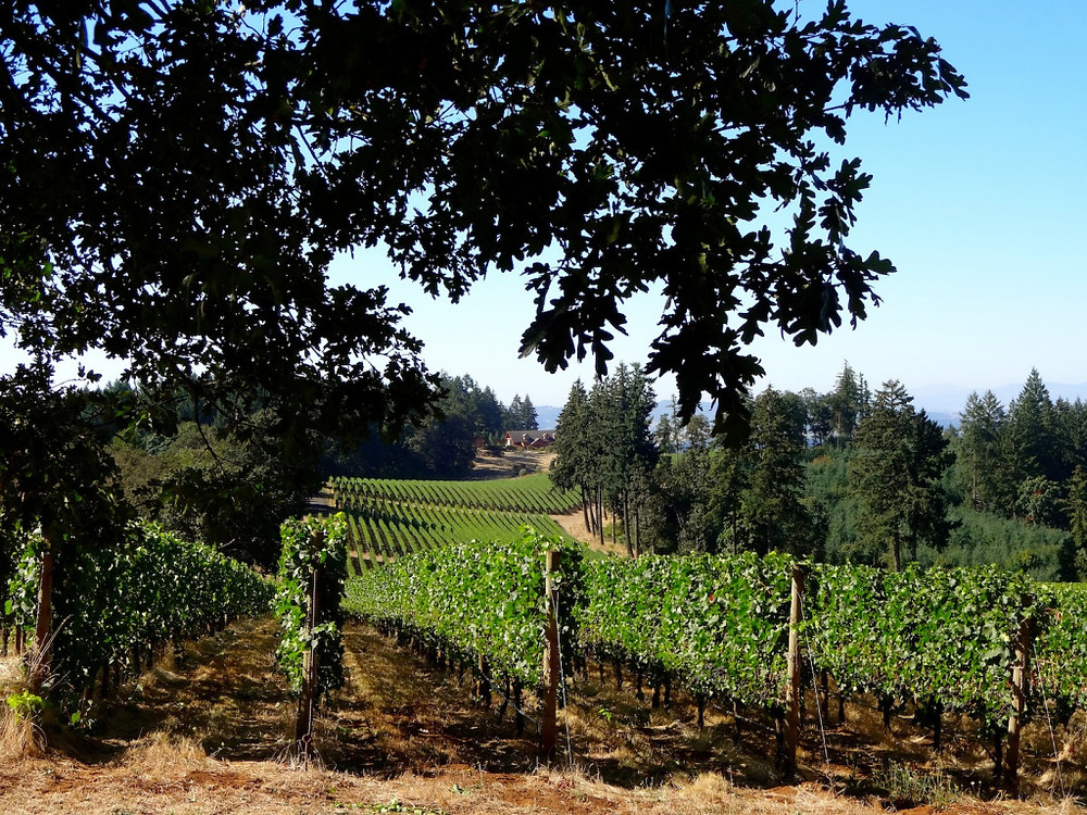 Love the patterns in wine country landscapes...