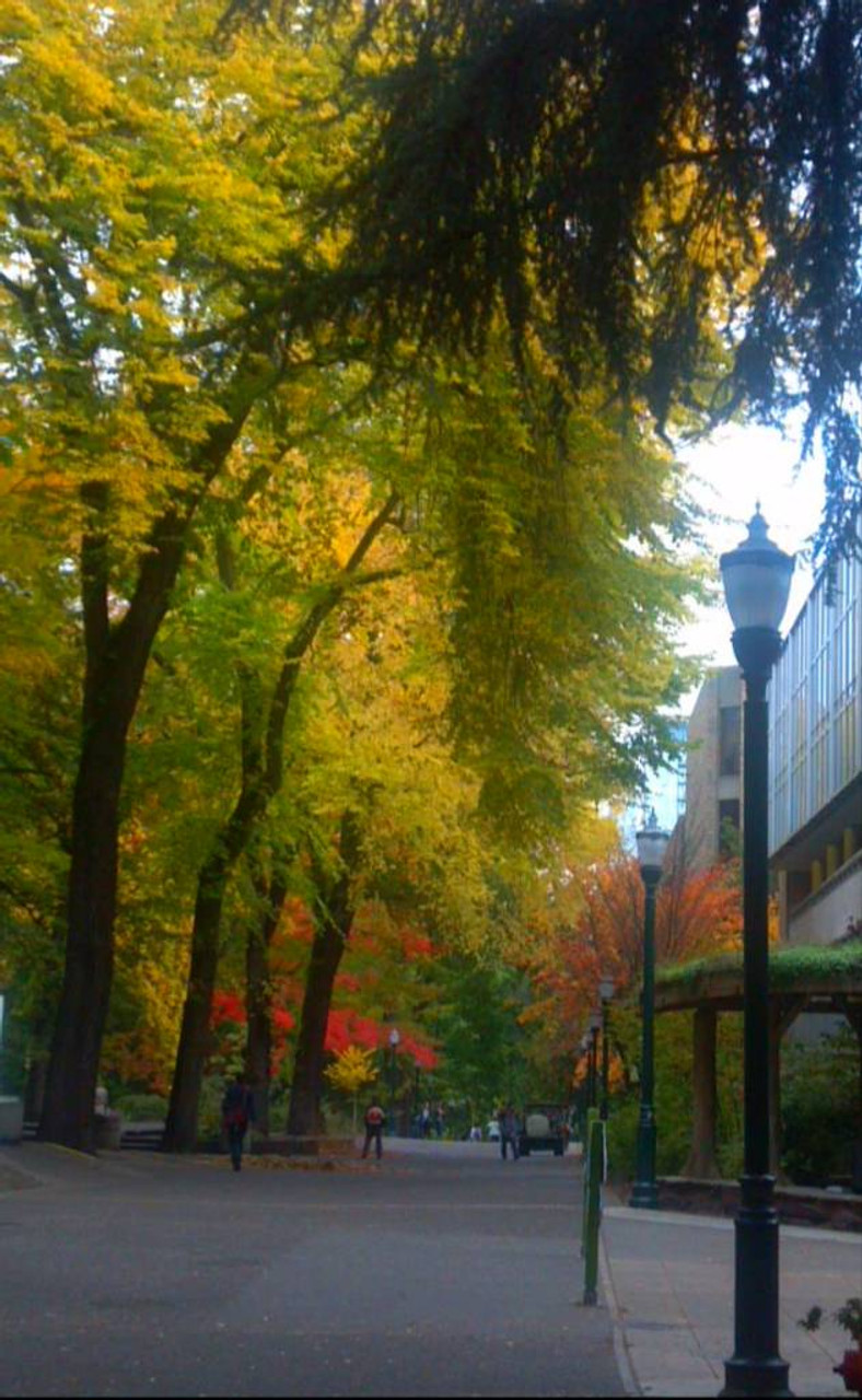 Lovely fall day at Portland State University, where I attended the Regional Livability Summit, bringing the topics of health, equity and sustainability together. While altogether I wasn't as wowed as I wanted to be, I loved the food systems breakout session featuring local nonprofits including Project Grow (