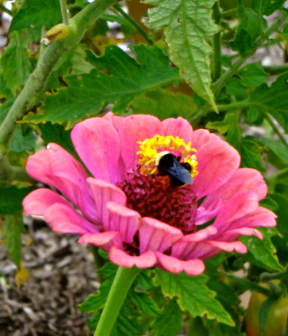 Lots of ideas in the adjoining community garden, and I was definitely enjoying being in flower mode :)