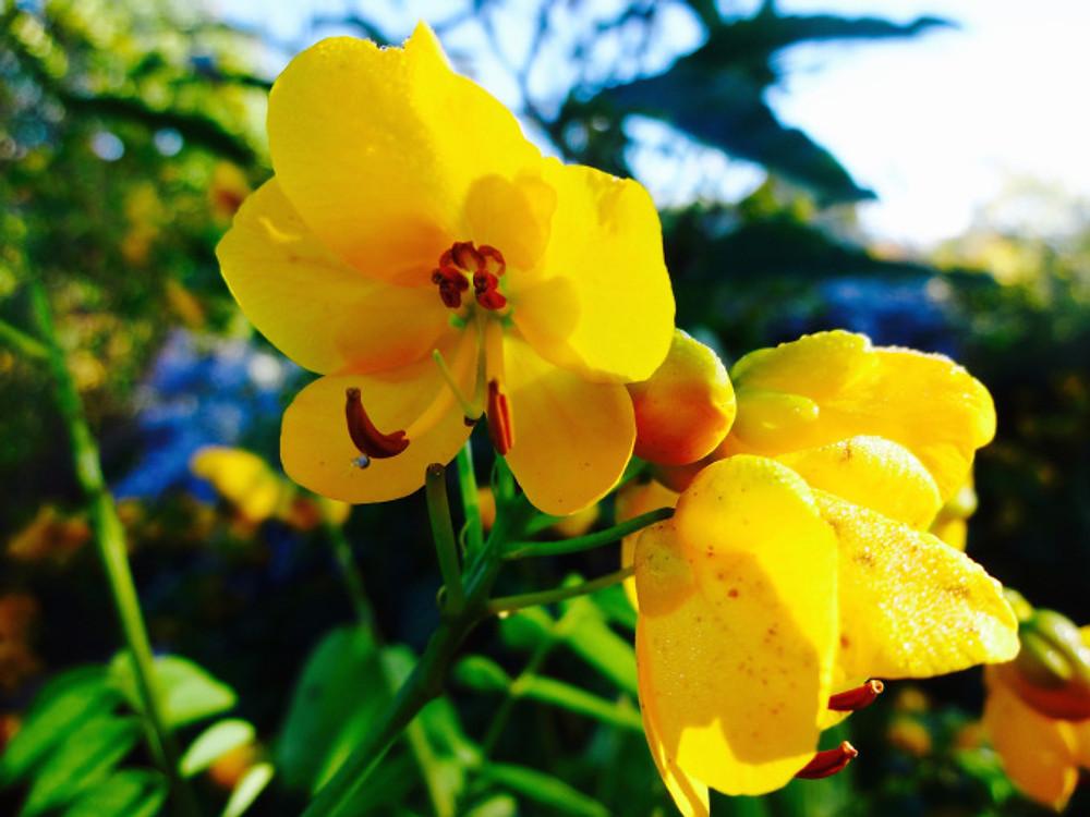Giv-flower20
