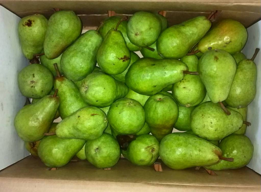 Picked up 20 lbs of pears for canning while we were out there - my favorite pear ginger preserves are first on the agenda!