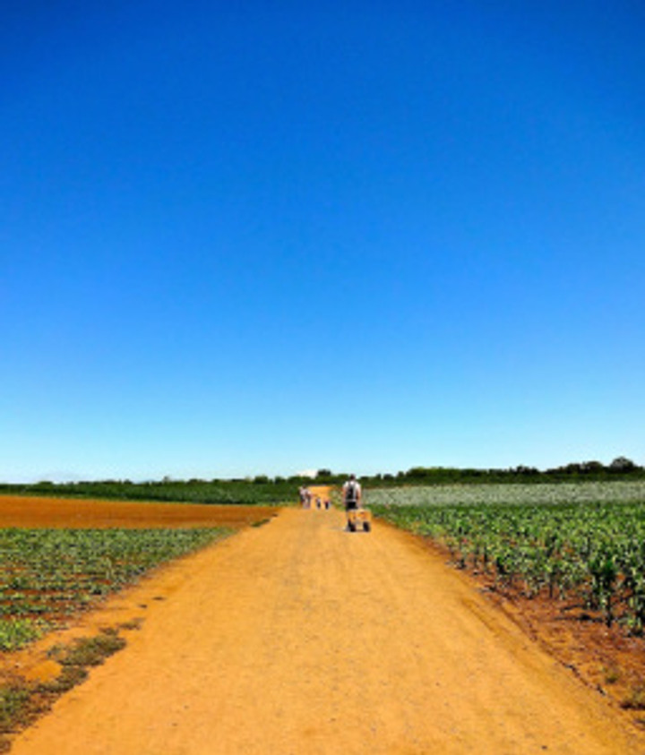 going to pick blueberries on Sauvie Island on the last day of our holiday...