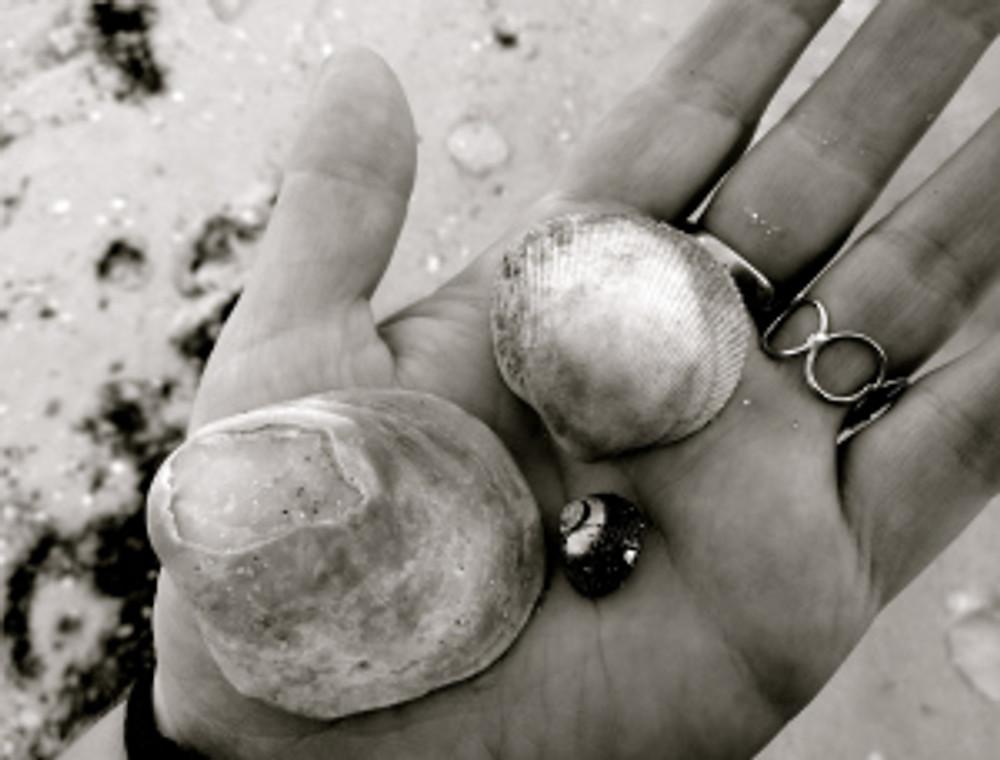 shells shells shells!