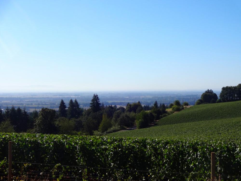 winecountry3