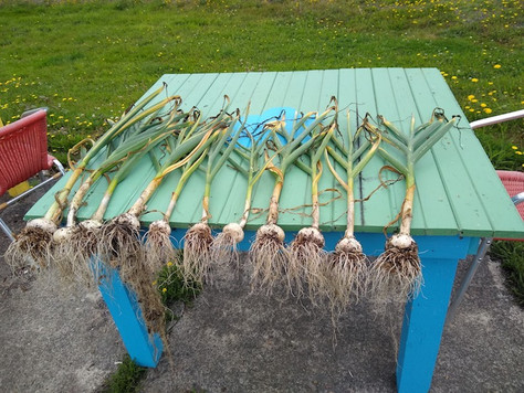 Coastal Gardening: July!