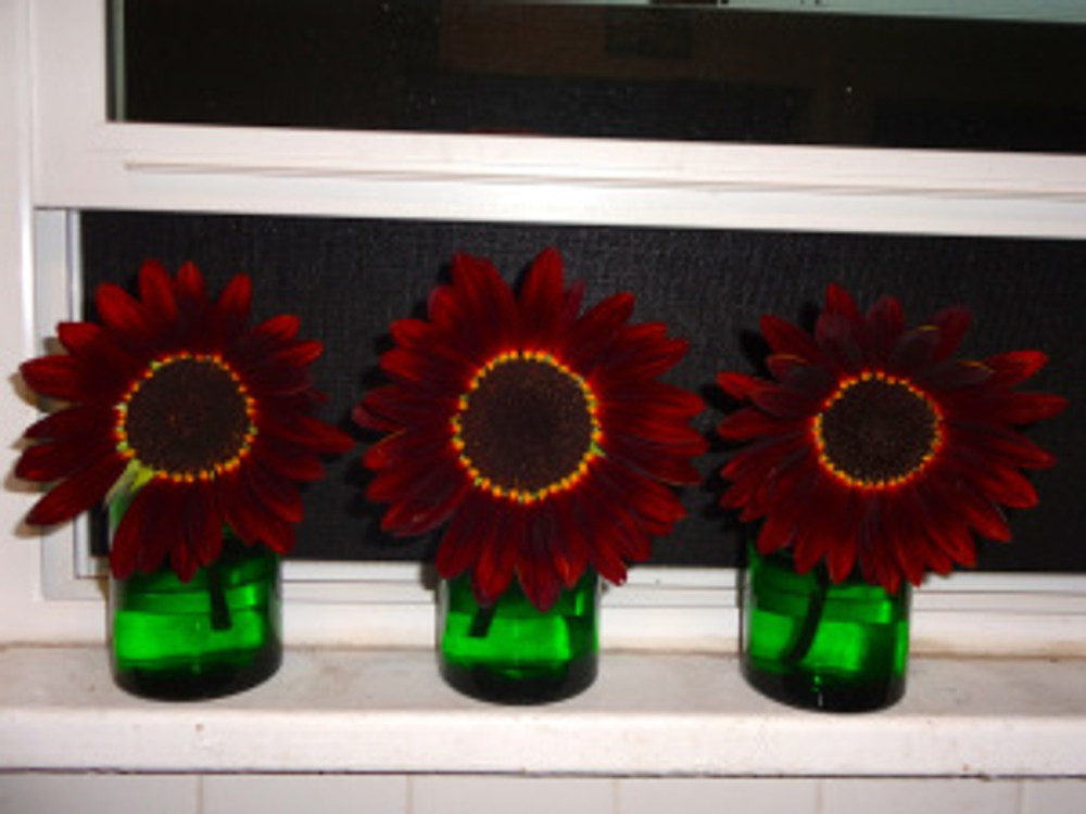 last of the sunflowers, can you believe it!