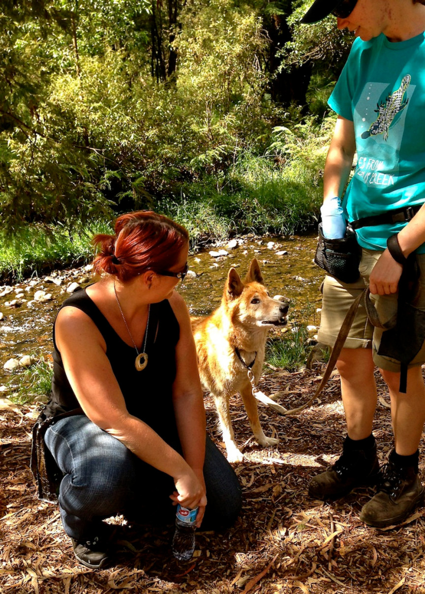 sitting with and then getting to pet a dingo!