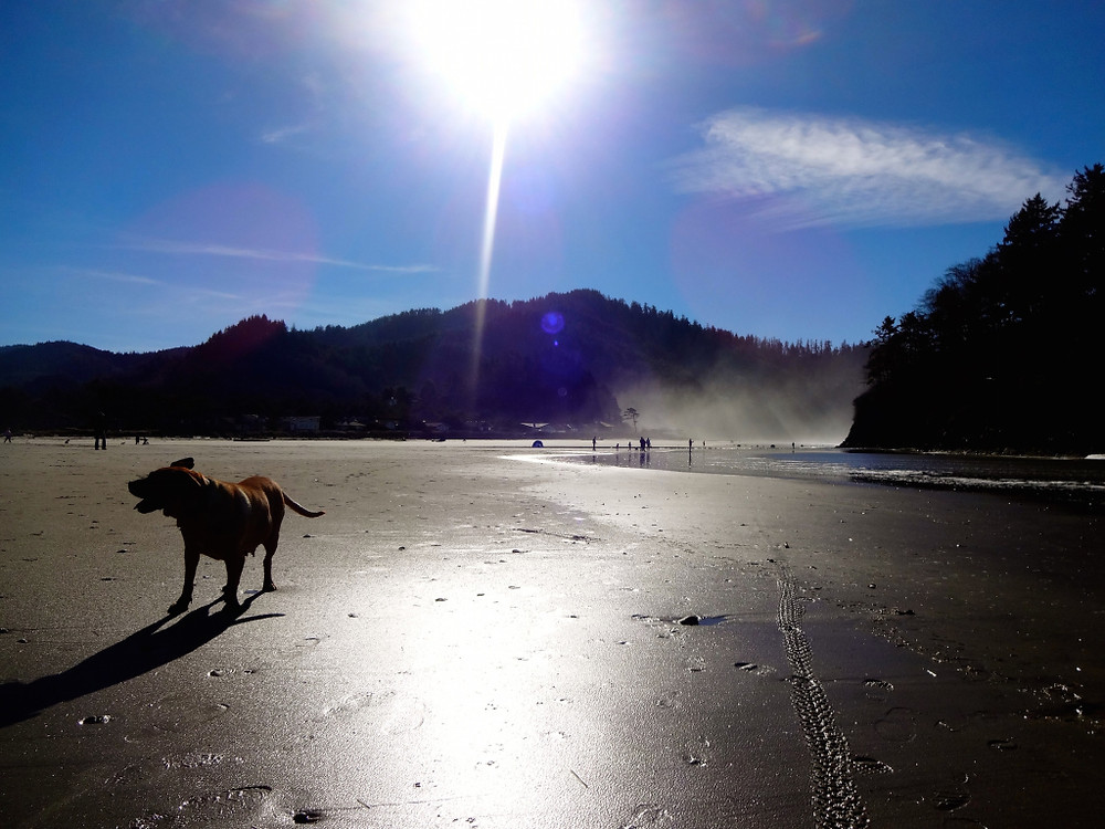 After a delicious dinner of fresh local dungeness crab and sharing a bottle of wine, we woke up the next morning and finished the weekend off in Neskowin before heading up Highway 6 back into the city. Happiness :)