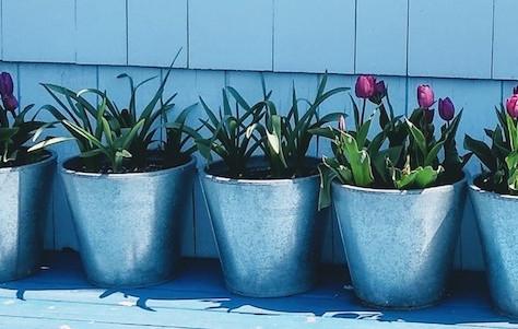 Coastal Gardening: April!