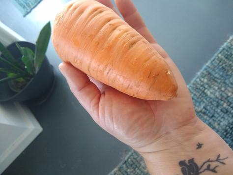 Coastal Harvest: Carrots