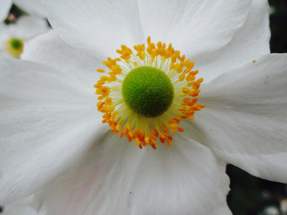 Giv-flower28