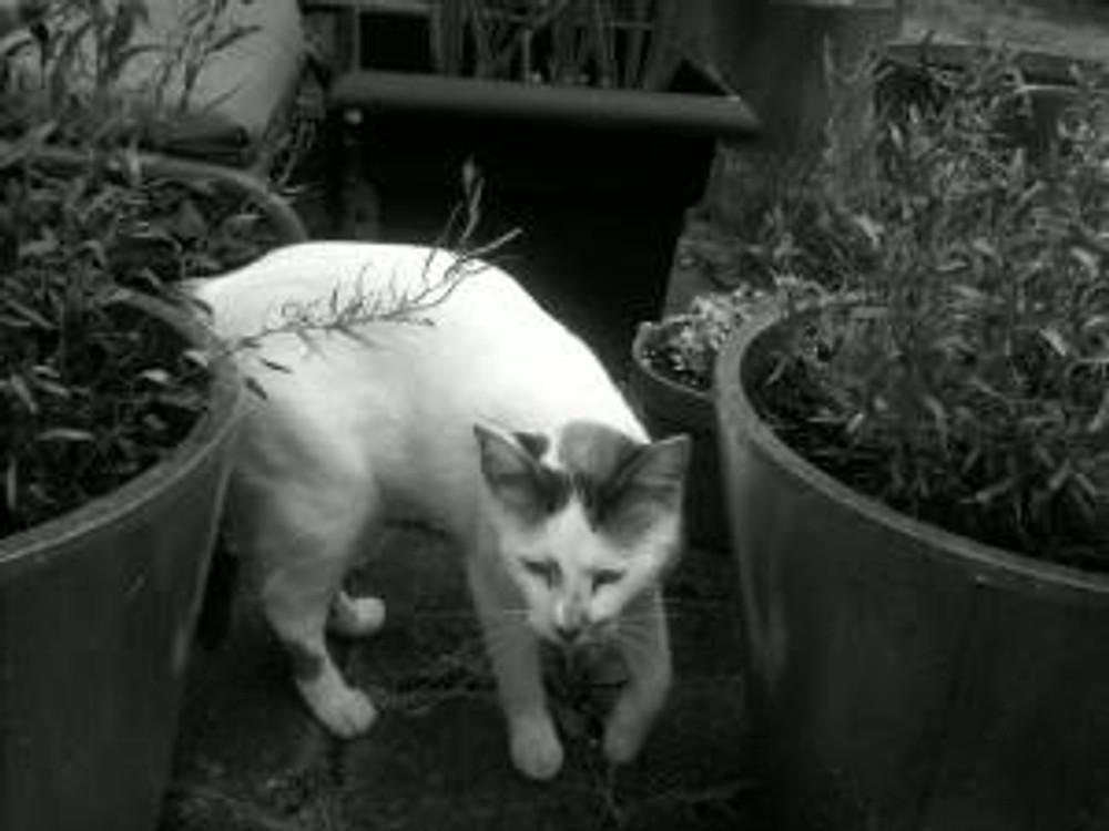 Kittybw