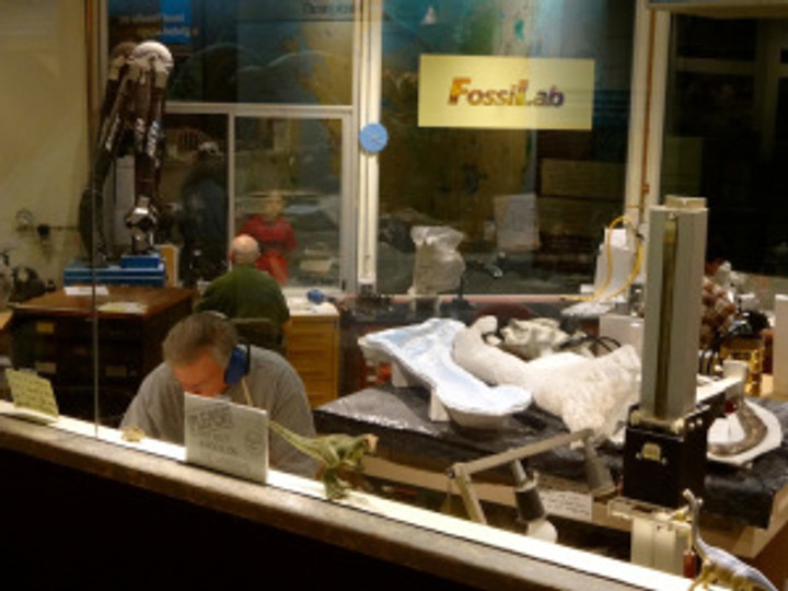 """Working from home, I'm in awe of these guys who work in the Fossil Lab """"bubble""""."""