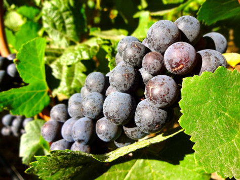 Birthday Getaway: Oregon Wine Country