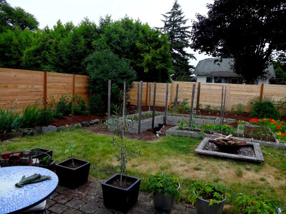 So loving the new fence on the north (left side) side of our property, where before this a large section had collapsed after the neighboring property was torn down (grrr...).