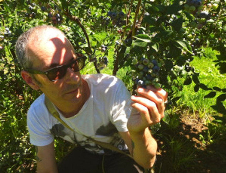 showing him my favorite way to pick blueberries on the hot summer days - get under the bush and pick!