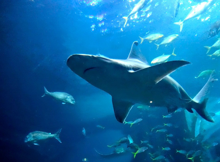 Aq-Shark