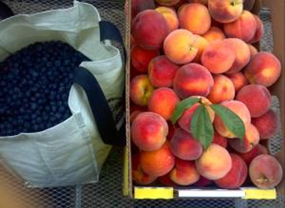 Step One: Go to Sauvie Island. Pick a lotta peaches.
