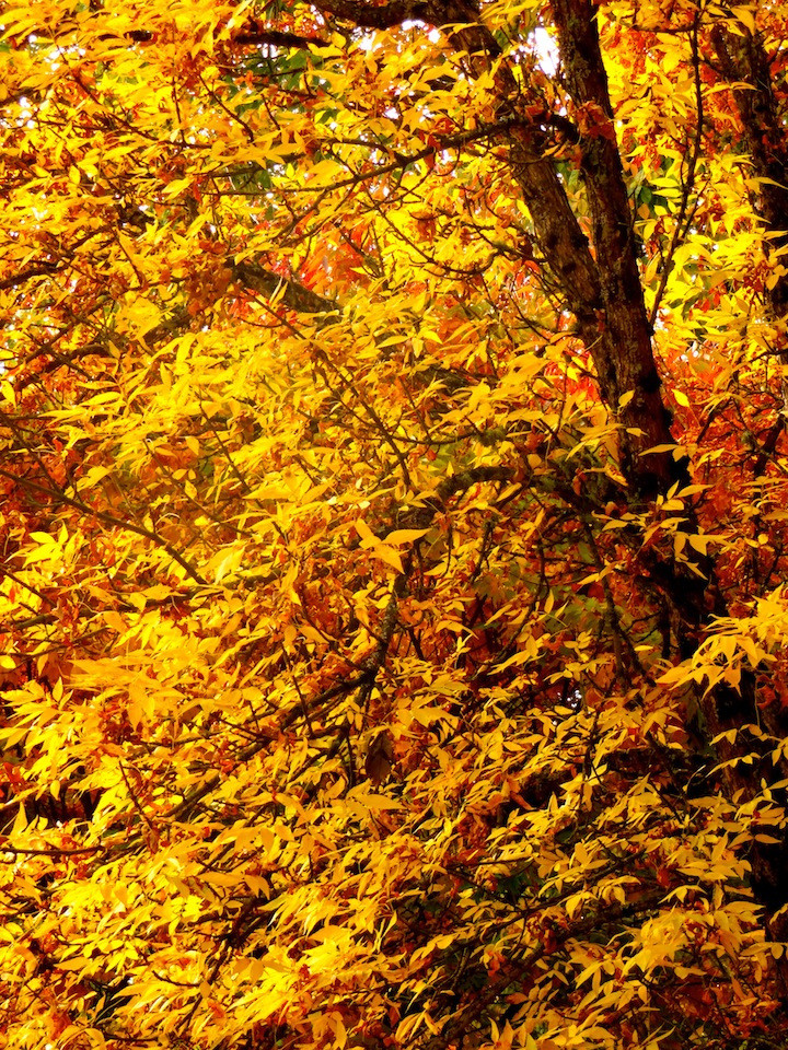 Autumn.  Now that's what I'm talkin' about!