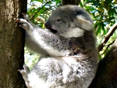 Oz Escape XVIII: Finally, Some Marsupials!