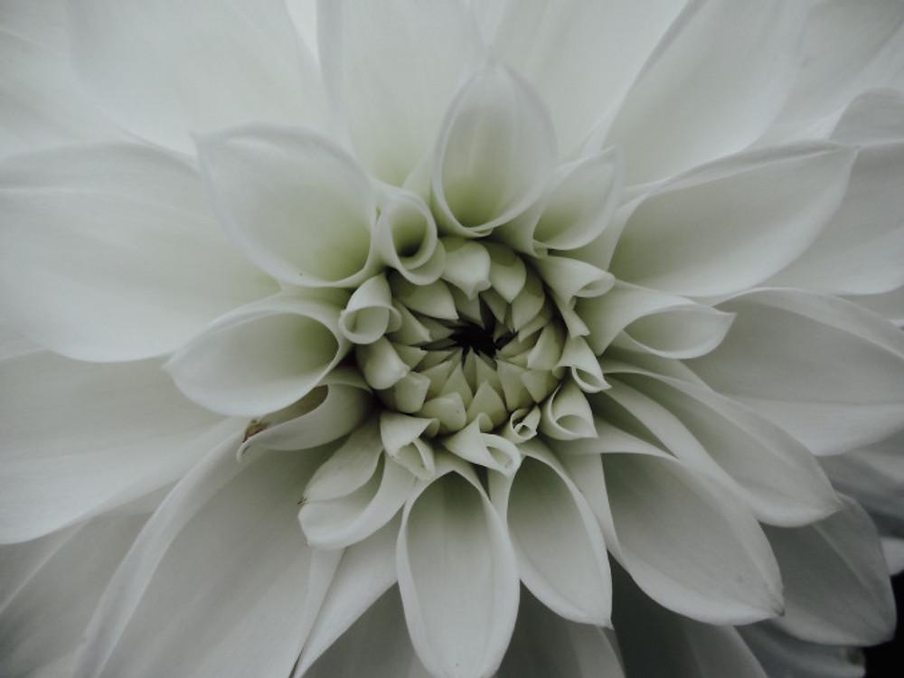 Giv-flower15