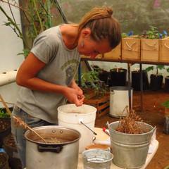 cuidado de semillas