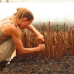 reproduccion vegetal