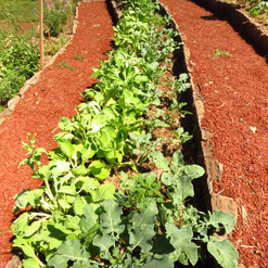 hortalizas familiares