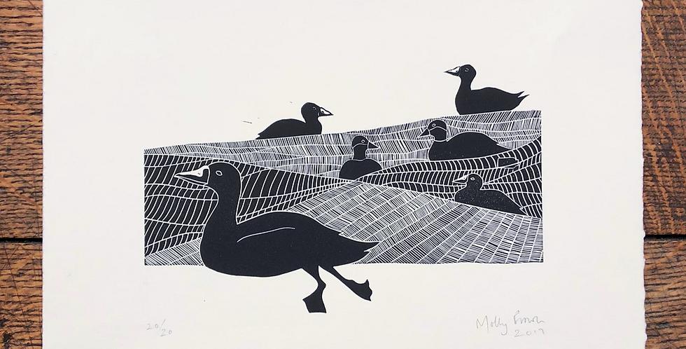 Scoter Ducks at Sea